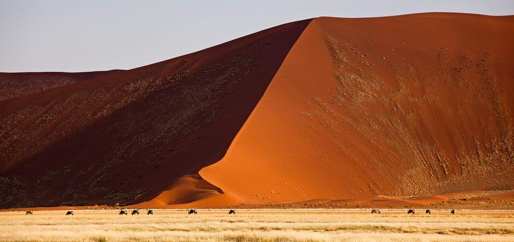 FlemmingBoJensen-Namibia---NAM001---Oryx-of-the-Dunes
