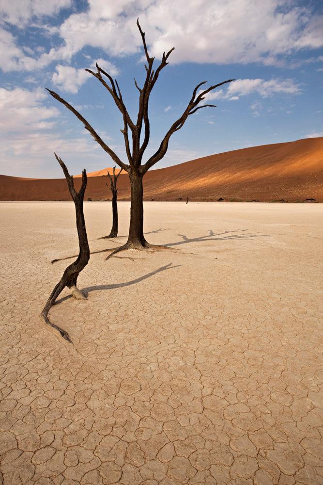FlemmingBoJensen-Namibia---NAM002---Tree-Sculptures