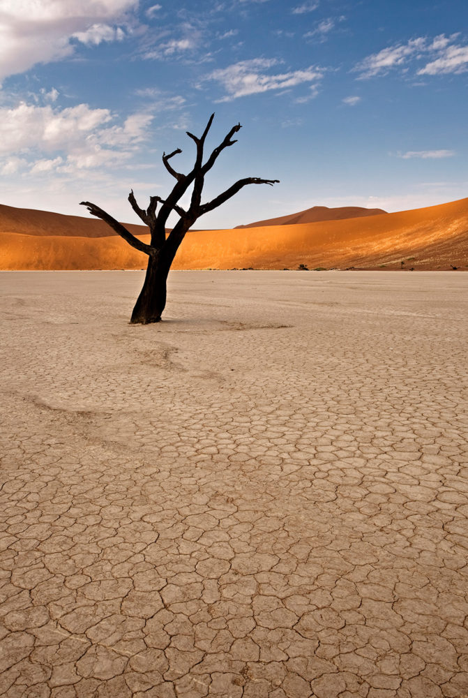 FlemmingBoJensen-Namibia---NAM024---Solitary-Twisted-Tree