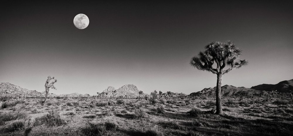 FlemmingBoJensen-USA---USA002---Joshua-Tree-Moonrise